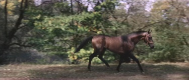 Horse_Left-Right