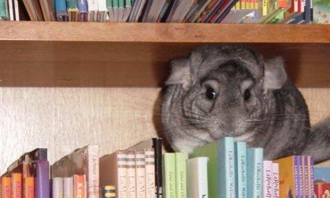 Here's Amelia for you... Photograph: wildrumpusbooks.com