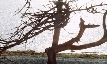 Last_tree