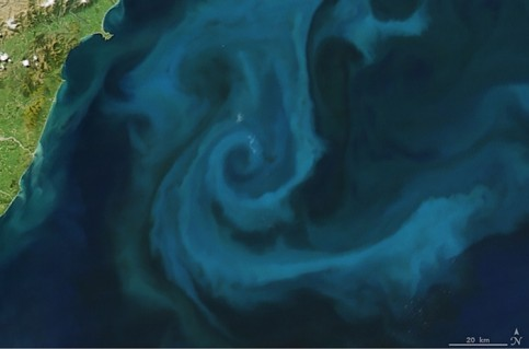 Phytoplankton bloom off the New Zealand coast